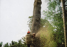 Commercial Tree Removal in Grafton County, NH