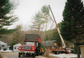 Crane Bringing Down Tree Branch Into Truck