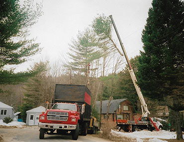 Crane Bringing Down Tree Branch Into Truck | Crane Tree Removal in Grafton County, NH