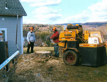 Two Men Preparing Tree Stump Grinder