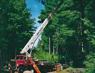 Crane Reaching Into Tree
