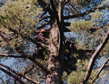 Man Standing In Tree
