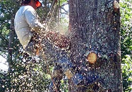 Close-Up of Man Cutting Tree