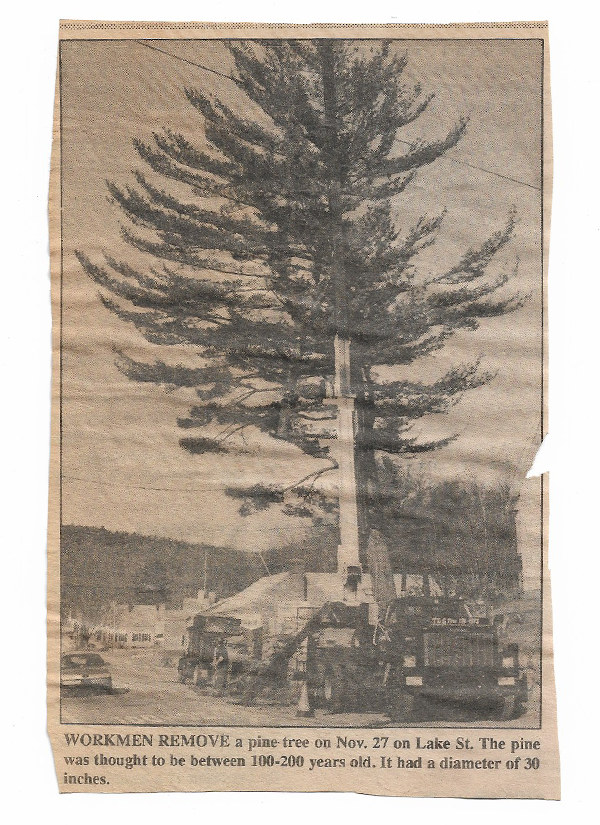 Newspaper Clipping #6 - Workmen Remove a Pine
